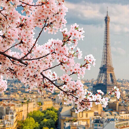 beautiful-eiffel-tower-flowers-france-Favim.com-2718672